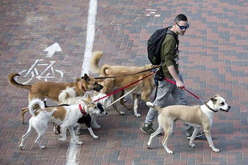 Tel Aviv crea un database del DNA dei cani per multare chi non pulisce gli escrementi